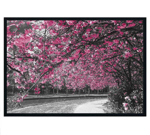 Cherry Blossom and Grey Trees Framed Photo Art