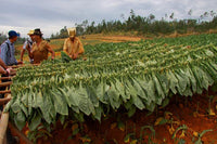 What Effect is Climate Change Having on Cuban Cigars?