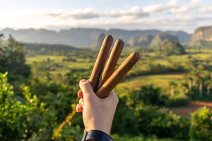 Cuban Cigars as Organic Products