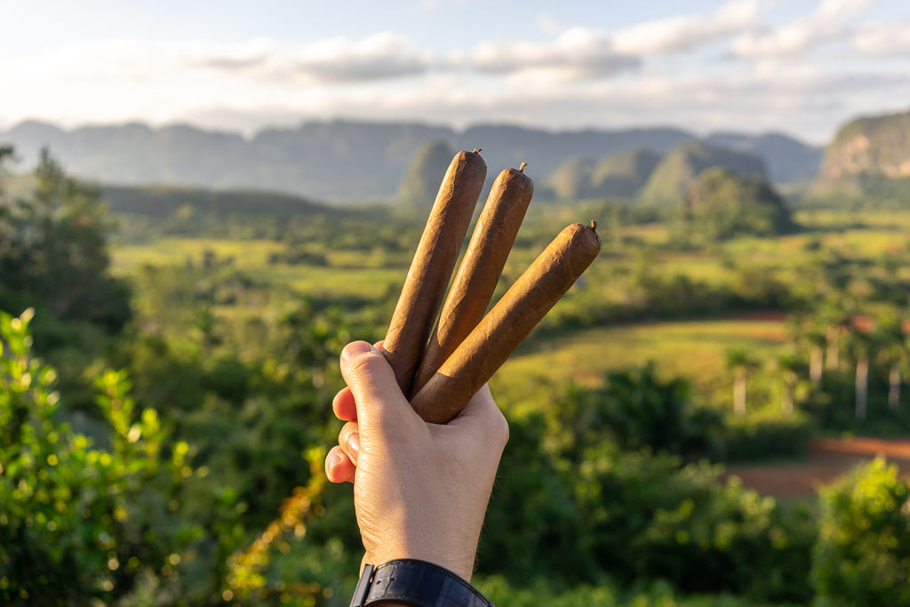 Made In Cuba: The Origin of Cuban Cigars
