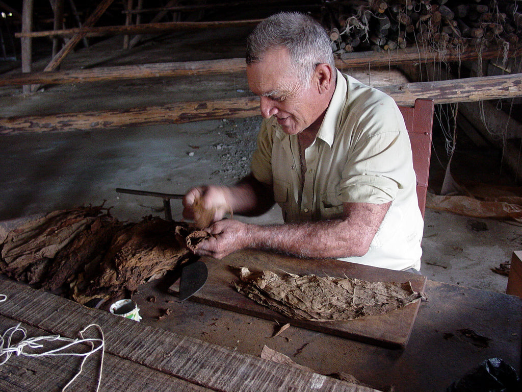 Spotlight: How Tobacco Is Grown In Cuba