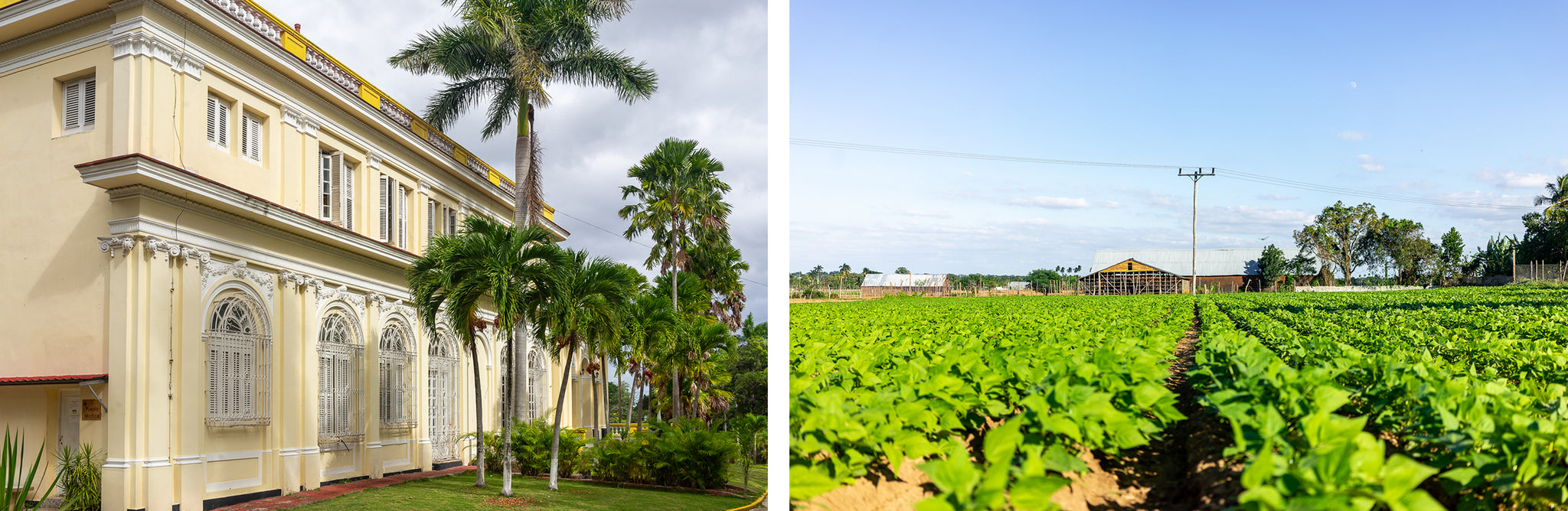 the outside of el laguito factory tobacco plantations