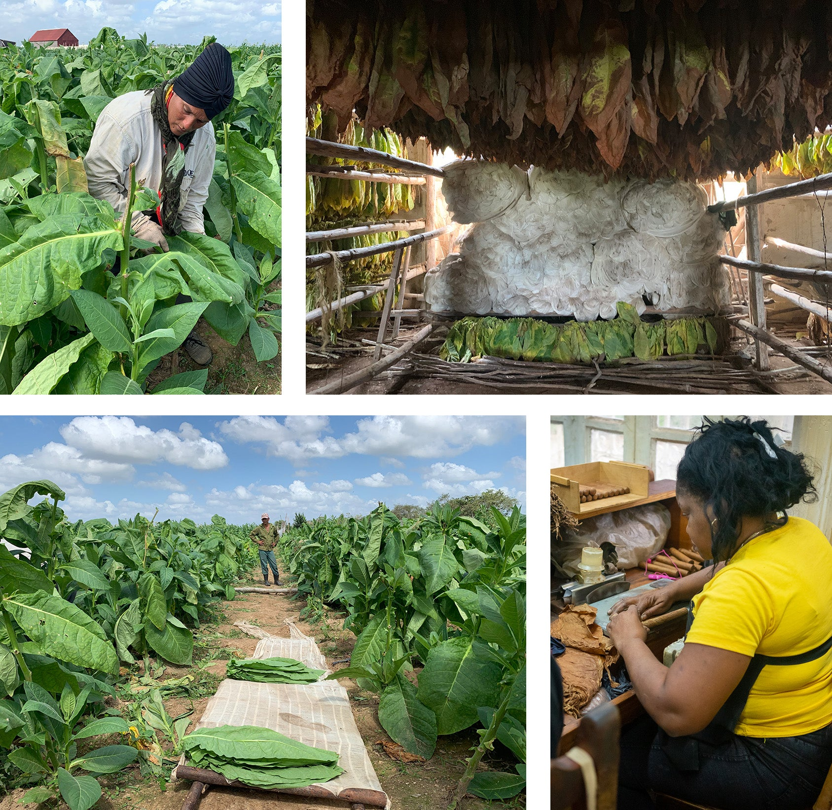 the process of creating cuban cigars EGM Cigars