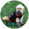 Small - Chic Black Rib Knit Acrylic Blend with Fashionable Grey Collar Doggie Sweater