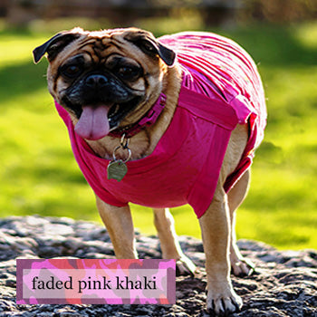 Ripped T's for Summer! For Pugs, Boston Terriers and Similar Breeds