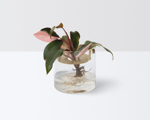 Propagation Kit - Gold