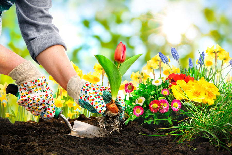 Gardening: A Weight Loss & Heart Attack Prevention Key, Study Finds