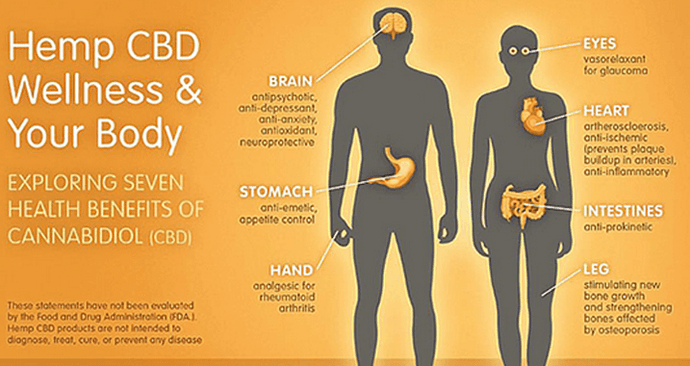 All You Need to Know About the Endocannabinoid System