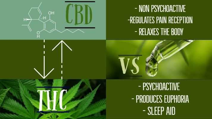 CBD and THC: Is There a Difference?