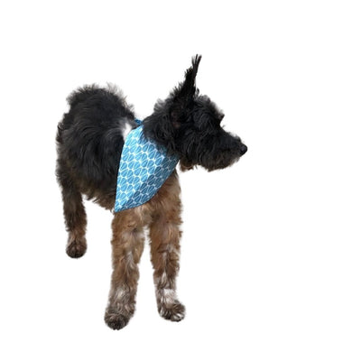 Paws United Summer Breeze Dog Bandana