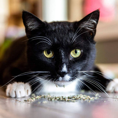 Meowy Janes All Natural Catnip