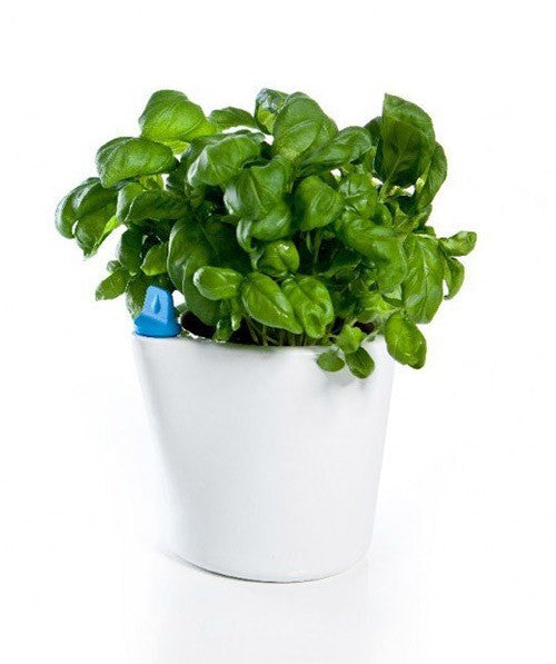 Royal VKB Herb2O Self Watering Pot