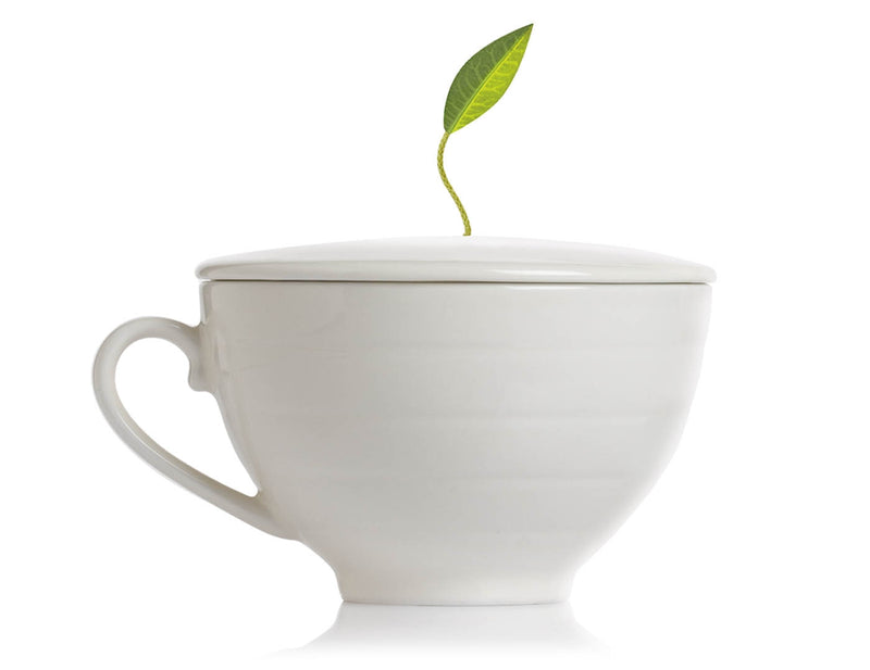 Tea Forte Café Cup- Bone White