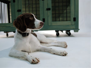 Triple Medium Dog Crate Furniture in Rustic Sage with Brittany Spaniel as our model