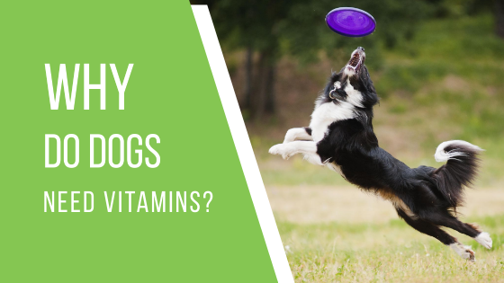 Why Do Dogs Need Vitamins?