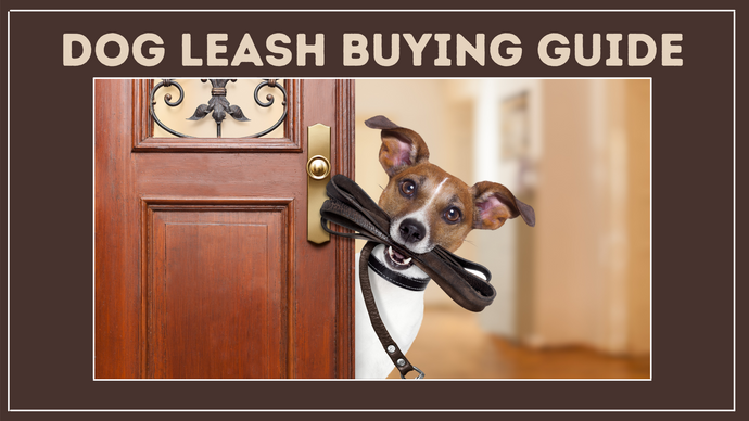 Dog Leash Buying Guide