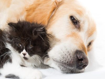 How Dogs and Cats Sometimes Behave Under the Same Roof