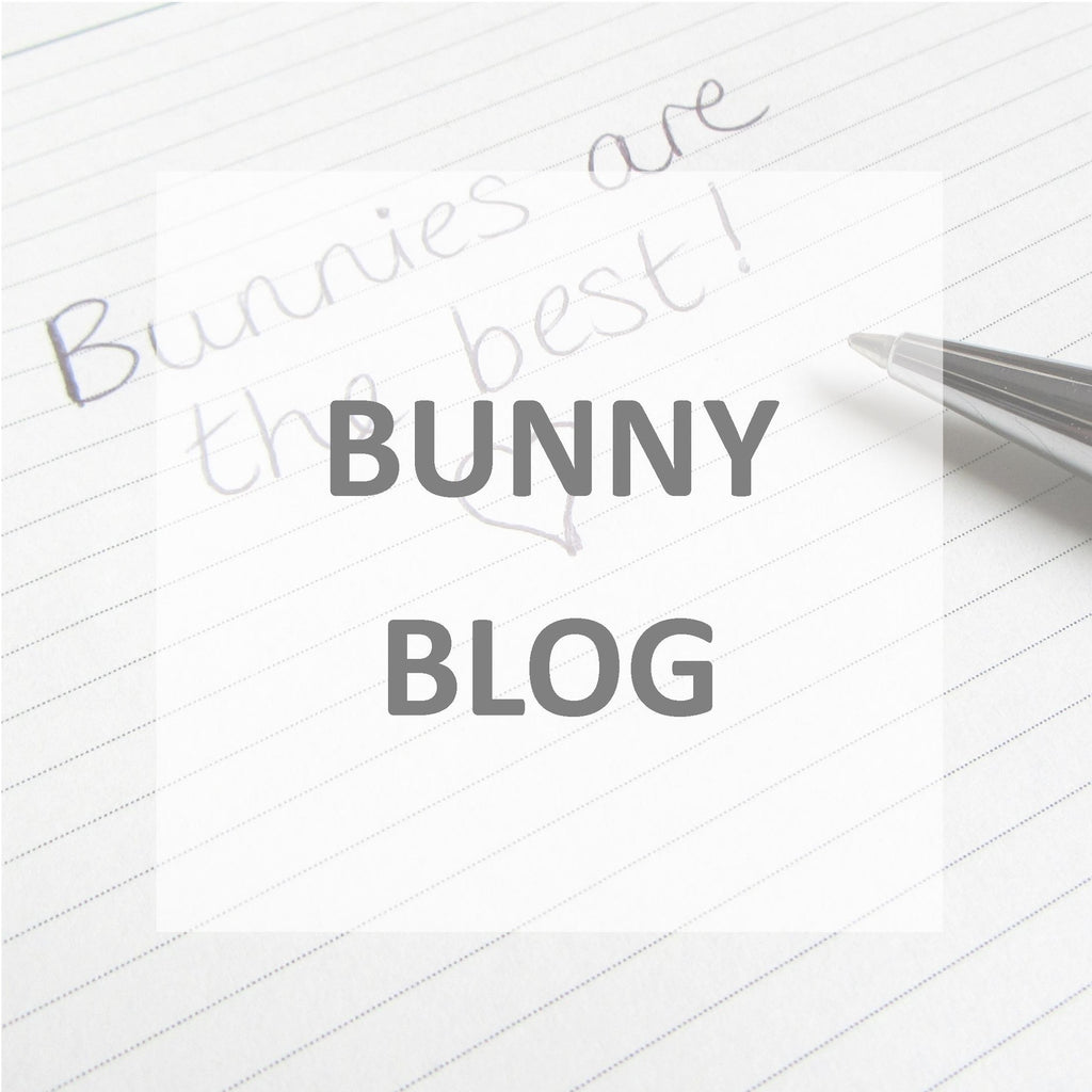 rabbit blog bunny blog rabbit care bunny care pet rabbit