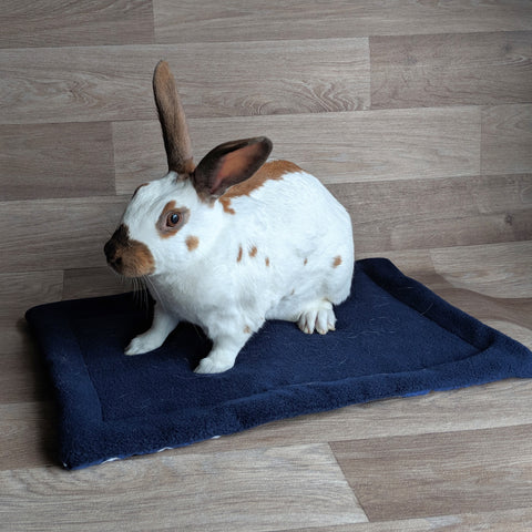 Lap Protector [Blue] - Everything Bunny Rabbit