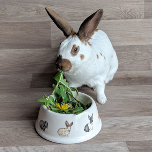 Rabbit Bowl | Everything Bunny Rabbit - Everything Bunny Rabbit