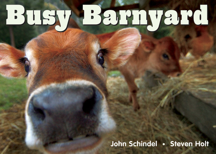 Book/Busy Barnyard
