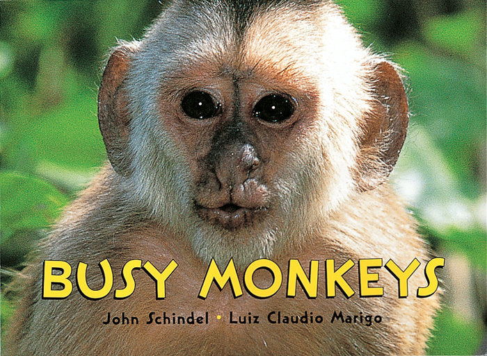 Book/Busy Monkeys