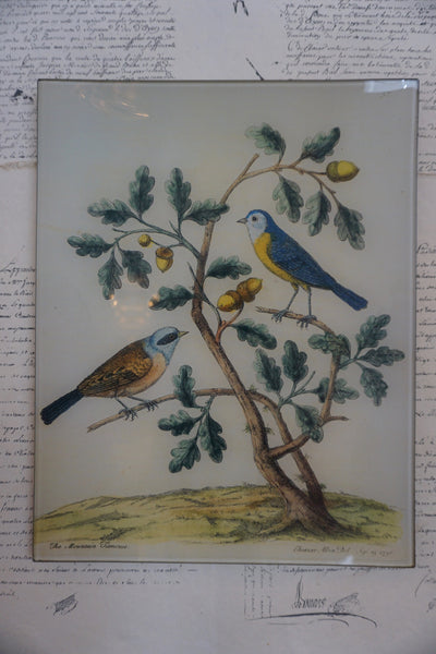 John Derian 'Mountain Titmouse (p. 285)'