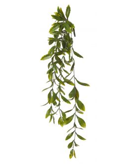 Hoya Leaf Hanging Bush 23x23x64cm