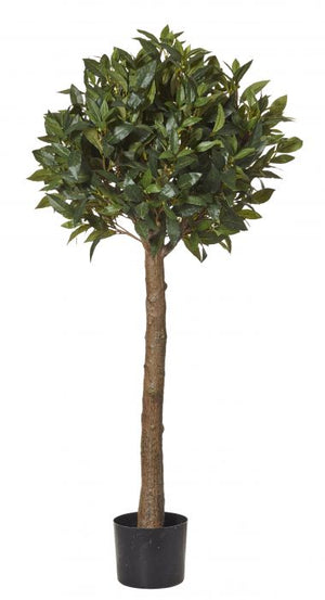 Sweet Bay Ball Topiary Green 125cm