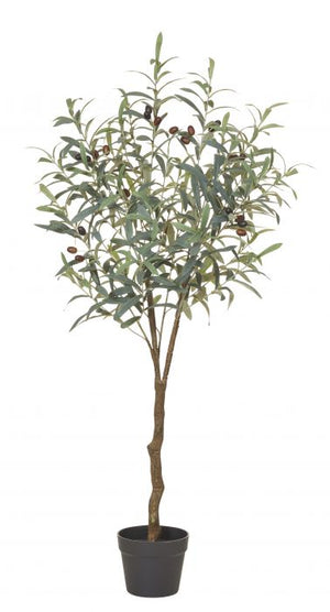 Olive Tree 122cm Green