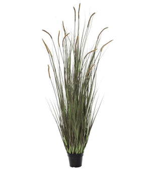 Reed Grass-Garden Pot 170cm Autumn