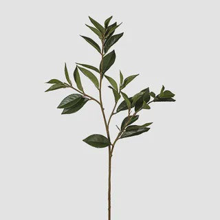 Bay Leaf Green 81cm