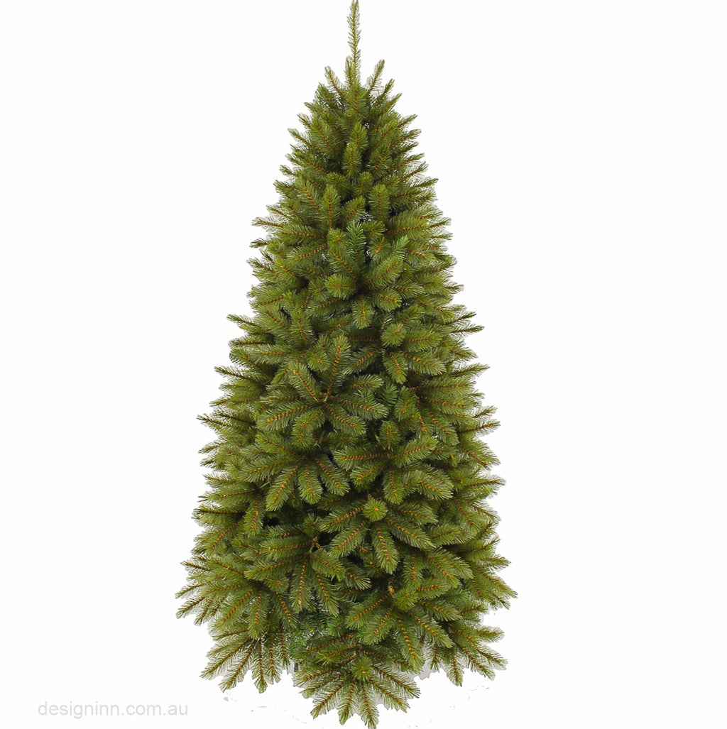 Colorado Spruce 152 cm (5 ft)