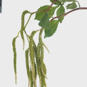 Amaranthus  Spray Green 88cml