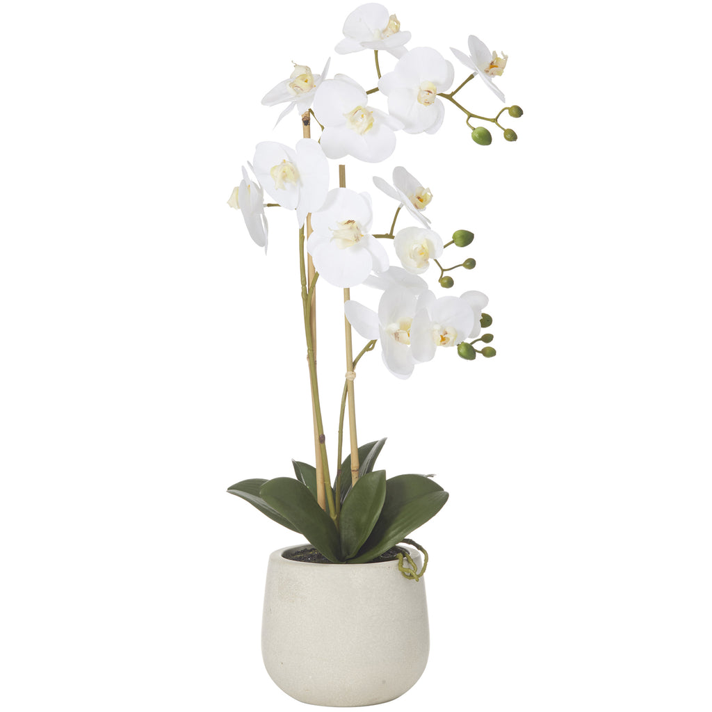 BFly Orchid Sandstone Pot  60cm White