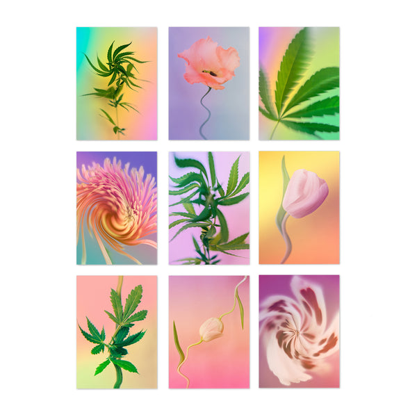 Psychedelic Fleurs || Postcards from Broccoli Magazine