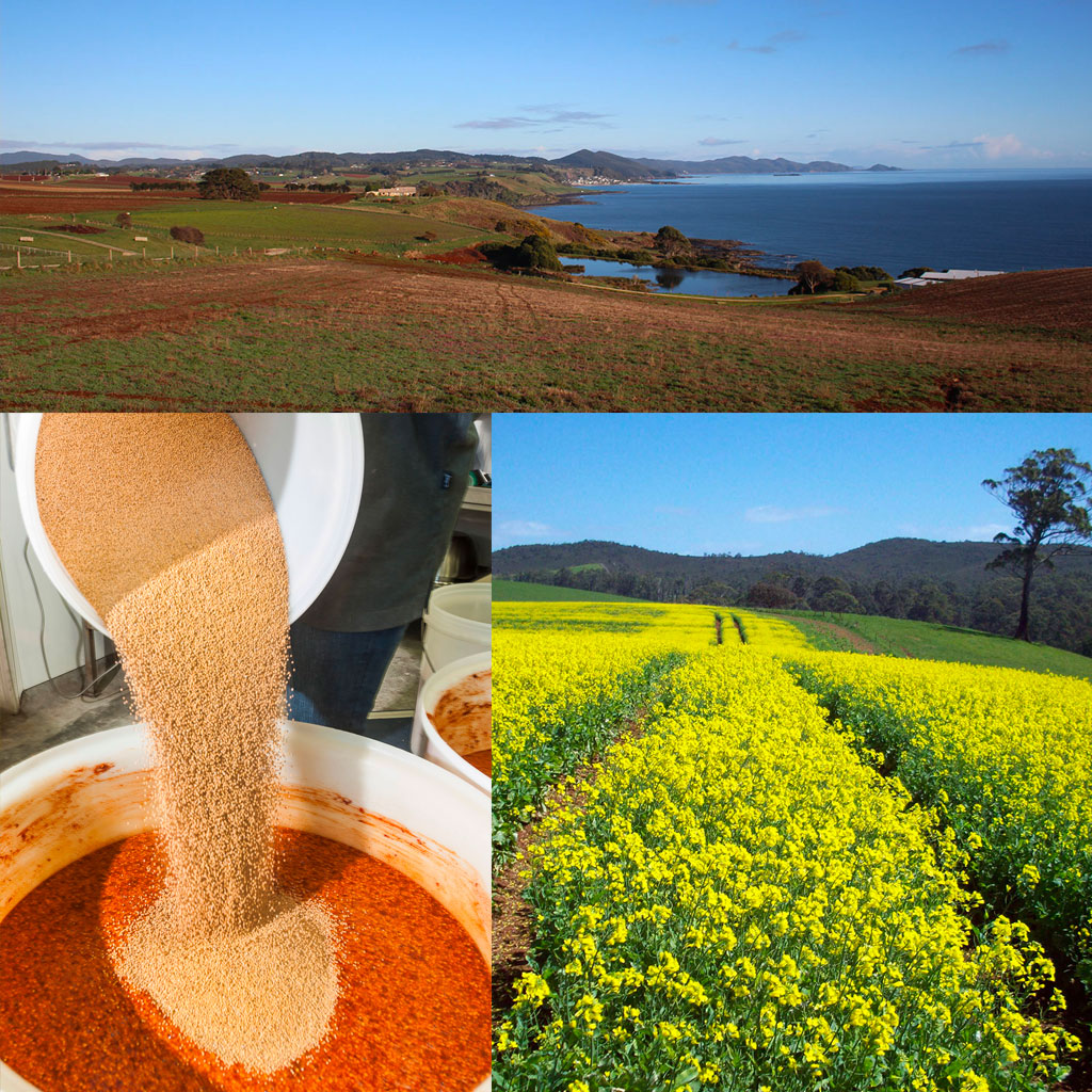 Beautiful views from the farm overlooking Boat Harbour Beach and some mustard being mixed.