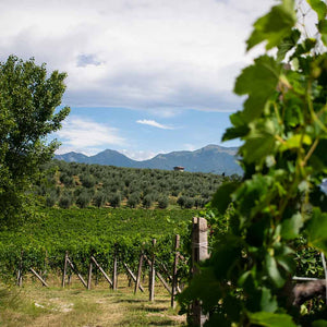 Organic or Biodynamic?