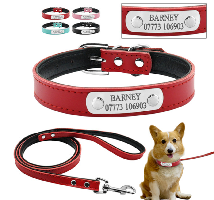 Custom Engraved Dog Collar And Leash With All Colours and Dog Model