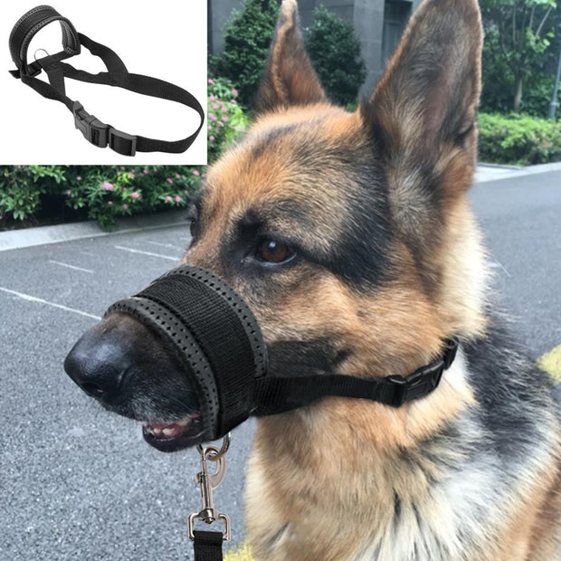 Dog Wearing Anti Bite Muzzle
