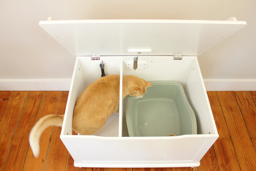 Video of cat entering the Designer Catbox. Press play to see.