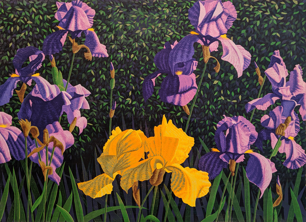 Bearded Iris - Woodcut on Paper by Gordon Mortensen