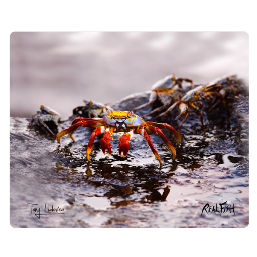 Red Rock Crabs Cutting Board