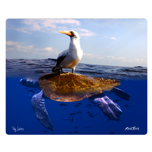 Sea Gull & Turtle Cutting Board