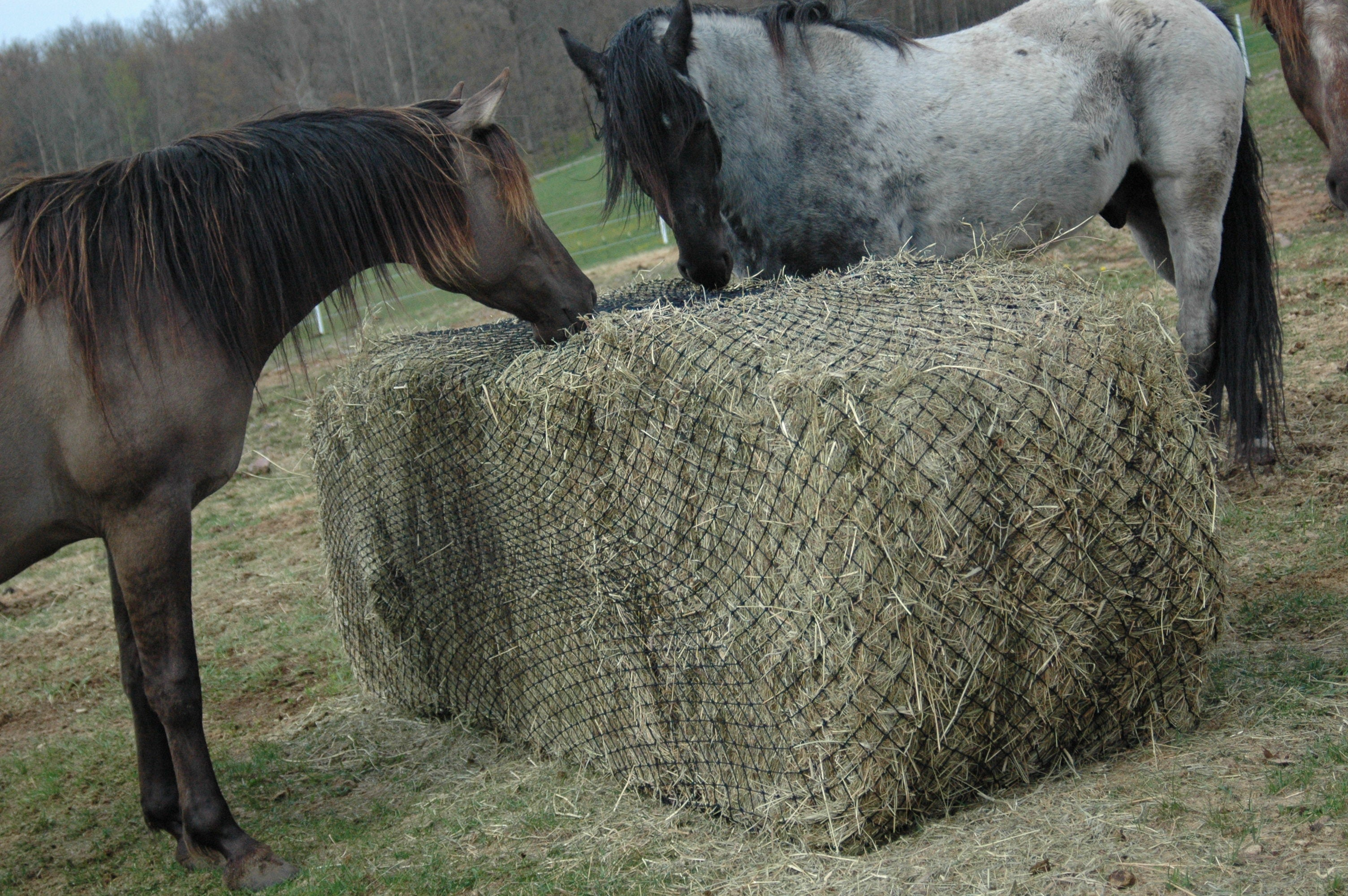 less t can it bought horses how so but ago s two net homestead days dixie roll lucy bad this feeder fast than my amazing img yes hay spread life we wasn of horse