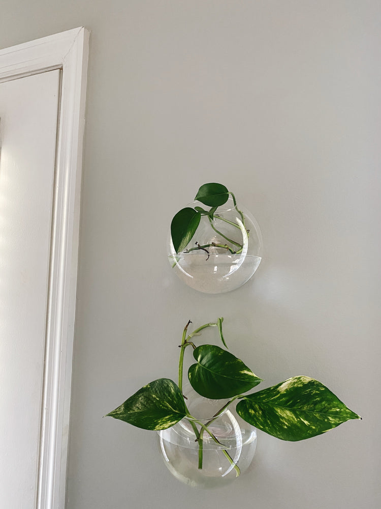 Glass Wall Planter