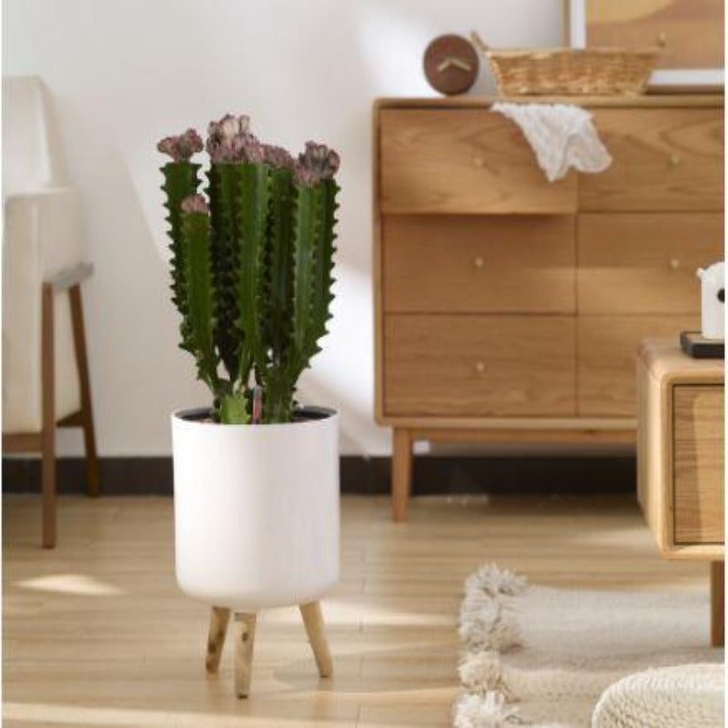 Self watering Large pot with wooden legs