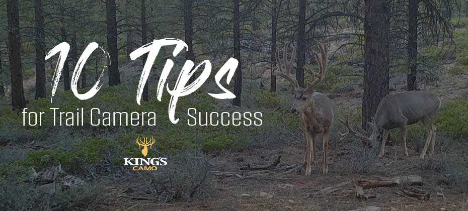 10 Trail Camera Tips for Success