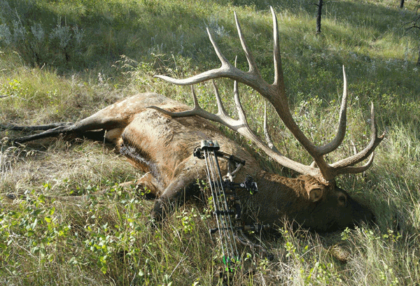 Potential New World Record Elk Has Been Confirmed