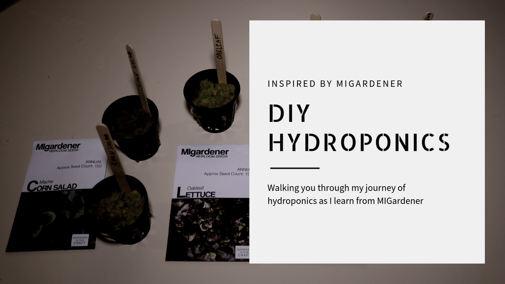 DIY Hydroponics: How to start growing indoors